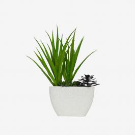 AQUA PURE GRAND sun flower Plant
