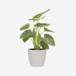 MODERN PLANT Flower Plant Plant